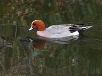 川沿いポタリング part 2 - TACOSの野鳥日記