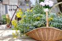 春を楽しむお花たち - mon dimanche blog