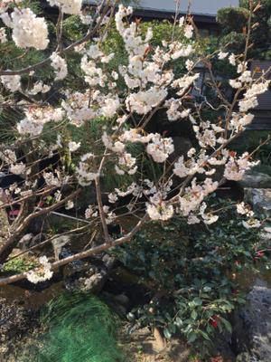 お彼岸、そして静岡市へ - ピアニスト田中理恵 -のんびりぃ日記-