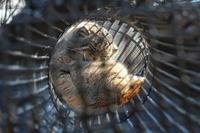 空中トンネルのセバスチャン - 続々・動物園ありマス。