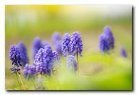 紫色の踊り子。 - 気まぐれフォト