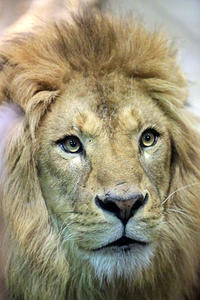 「ネコたちの谷」で暮らす動物たち - 動物園放浪記