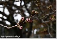 春はそこまでⅡ - Have a nice day!