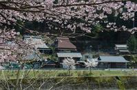 朽木針畑郷(桜の季節編) - 写真の散歩道