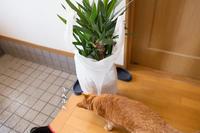 憧れの観葉植物 - にゃんず日記