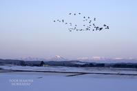 春の使者、来たる。 - ekkoの --- four seasons --- 北海道