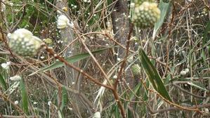 春はすぐそこ(自然の家の生き物通信) - 四日市市少年自然の家