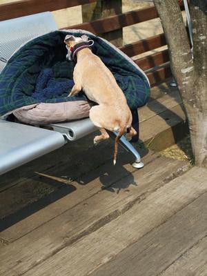 ゼブラで大人気のシルモーちゃんのバッグ。 - イタグレ ルビーの日記  Ruby Tuesday