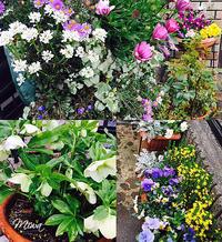 花でいっぱいにする - Miwaの優しく楽しく☆