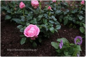 お休み - La rose 薔薇の庭