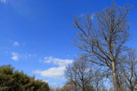 この寒そうな空ともそろそろお別れですか。 - 平凡な日々の中で