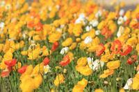 春の花たち♪ - happy-cafe*vol.2