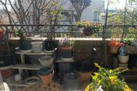 風の強い日はお家でイタリアン! - 生きる歓び Plaisir de Vivre。人生はつらし、されど愉しく美しく