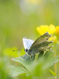 翅の佇まい - M2_pictlog