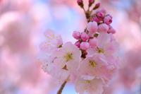 ピンクグラデーション - PhotoWalker*