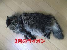 イオンの休日(3/23) - ニャンコ座リポート  since 2005 April