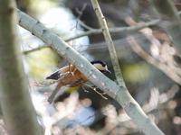 クロジ谷の小鳥たち - 花と葉っぱ