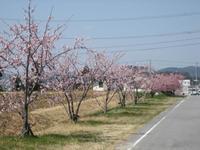 春を探しに……(^O^)/ - ケアホーム穂の香(ほのか)、ケアホームあや音(あやね)、デイサービス燈いろ(といろ)の日常