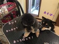 店長の日記〜犬バカ〜 - トリミングサロンオリーブスタッフ日記