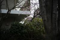 桜 - ひげメガネの写真日記