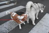 賢いかしこい♪ (^o^) - 犬連れへんろ*二人と一匹のはなし*