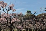 大阪城の梅林咲き乱れ☆ - お花畑で微笑んで**