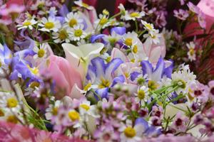 春のイングリッシュ・ガーデンに包まれて。。。チューリップと小花の贅沢ブーケ - 元英国在住アート・セラピストが造る癒しの庭