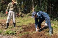 サトイモの植え付け - 里山を歩く会