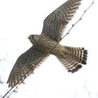 橋の下 - TACOSの野鳥日記