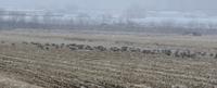 にわか雨ならぬにわか雪・・・・・・・ - カシャカシャblog