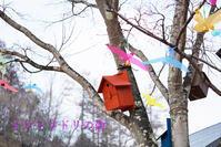 軽井沢の鳥たちを身近に感じよう~♪ ~星野エリア  イロトリドリの街♪~ - きれいの瞬間~写真で伝えるstory~