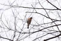 昭和記念公園で野鳥さん♪ - 今日もカメラを手に・・・♪