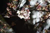 咲楽 便り 1 - フォト・フレーム  - 四季折々 -
