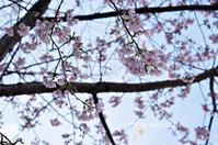 一足早い名古屋のお花見 ~白壁の文化のみち周辺~ - YUKKESCRAP