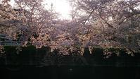 桜前線 - そばやの娘の話