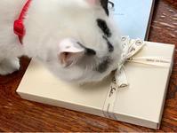 ホワイトデー用のチョコレートが届いた/サティ - Lucky★Dip666-II