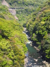 2015.熊本 - ルーシュの花仕事