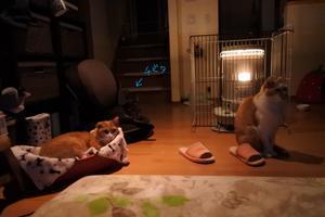 器用な男 - 「両手のない猫」チビタと愉快な仲間たち