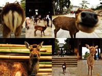 奈良・東大寺金堂と二月堂 - あ お そ ら 写 真 社