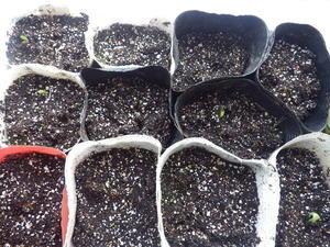 簡易温室で苗作りやっと開始です。 - チドルばぁばの家庭菜園日誌パート2