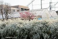 白い花が満開の街並み!!! - 自然のキャンバス