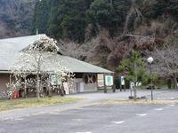 花の咲くころ - 千葉県いすみ環境と文化のさとセンター