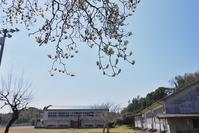 白木蓮と廃校舎と蒲公英と - いつかみたソラ
