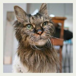 ご長寿猫 はんぞう との暮らし 「3月6日~3月10日の はんぞう」 - たびねこ