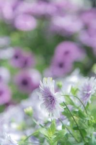 Purpleのため息 - 気ままにお散歩