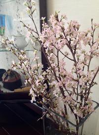 満開の桜。 - ゴローザ通信