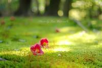 α7Ⅱで苔を撮る:岡山後楽園 - OYP