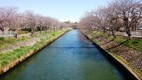海老川の桜のツボミと最近食ったもの。 - 草の庵日録