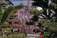 お花見ツーリング 梅 - TRIUMPH&OUTDOOR