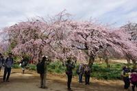 3月24日 新宿御苑 - てしやから君の撮影日記